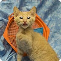 Adopt A Pet :: Kennedy - Addison, IL