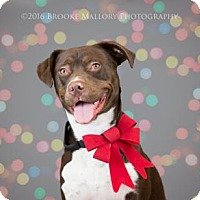 Adopt A Pet :: Jack Tripper - Redmond, WA