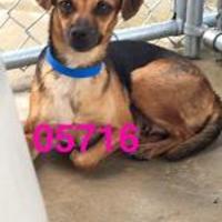 Adopt A Pet :: PHOEBE - Kiln, MS