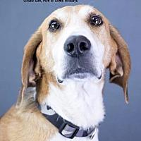 Adopt A Pet :: Jim - Greeneville, TN