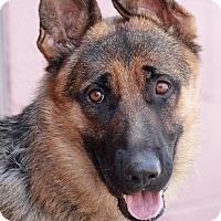 Adopt A Pet :: Moritz von Murtz - Los Angeles, CA