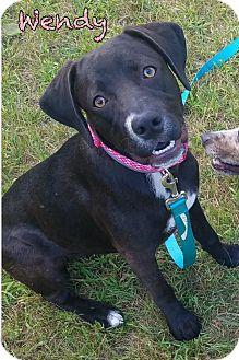 Labrador Retriever Mix Puppy for adoption in Tomah, Wisconsin - Wendy
