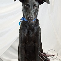 Adopt A Pet :: Ryder - Newcastle, OK