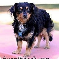 Adopt A Pet :: Junebug - San Jose, CA