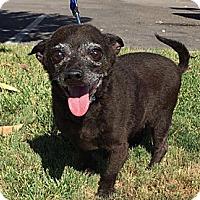 Adopt A Pet :: Billy - calimesa, CA