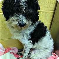 Adopt A Pet :: Checkers - Essex Junction, VT