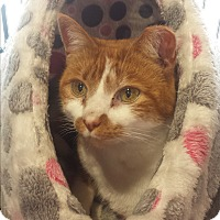 Adopt A Pet :: Winnie - St Paul, MN