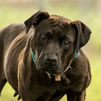 Adopt A Pet :: Beauty - chouteau, OK