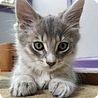 Adopt A Pet :: Mr. Scary - Troy, MI