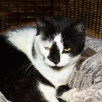 Adopt A Pet :: Patches #2 - Pendleton, OR