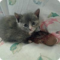 Adopt A Pet :: Chole&Molly - Clay, NY