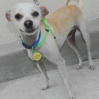 Adopt A Pet :: Theo - Umatilla, FL