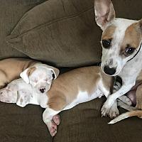 Adopt A Pet :: Lorelei - San Francisco, CA