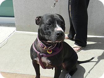 Adopt A Dog Birmingham Mi