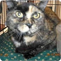 Adopt A Pet :: Greta - Riverside, RI