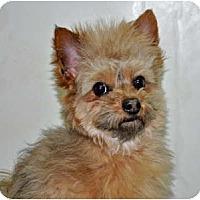 Adopt A Pet :: Stevie - Port Washington, NY