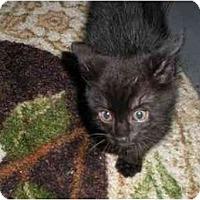Adopt A Pet :: Poe - Syracuse, NY