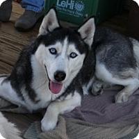 Adopt A Pet :: Aneeka - Horsham, PA