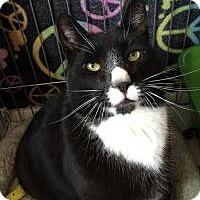 Adopt A Pet :: Henry - Raritan, NJ
