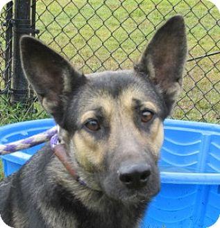 German Shepherd Dog Mix Dog for adoption in Aiken, South Carolina - SAVANNAH