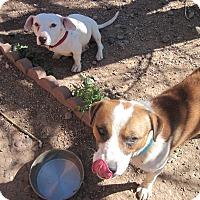 Adopt A Pet :: Sawyer Snyder - Albuquerque, NM