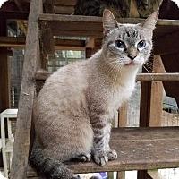Adopt A Pet :: Bebe - Spring, TX