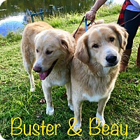 Adopt A Pet :: Buster and Beau - Nanuet, NY