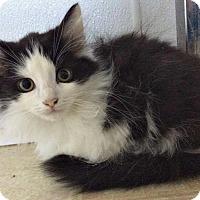 Adopt A Pet :: Kirk - Jefferson, NC