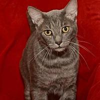 Adopt A Pet :: Henry *F* - Sanford, FL