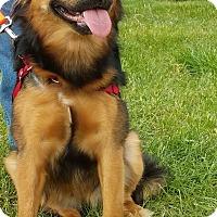 Adopt A Pet :: Hannah-Adopted! - Detroit, MI