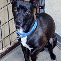 Adopt A Pet :: Kaiki - San Jacinto, CA