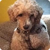 Adopt A Pet :: Ricardo 3441 - Toronto, ON