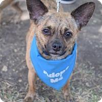Adopt A Pet :: Prince - Los Angeles, CA
