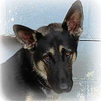 Adopt A Pet :: Yaeger - Oswego, IL