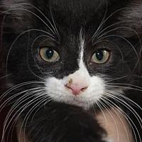 Adopt A Pet :: George (& Ron) - Herndon, VA