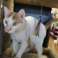 Adopt A Pet :: Tango - Yardley, PA