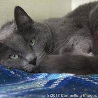 Adopt A Pet :: Lily - Fort Collins, CO