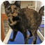 Photo 2 - Calico Cat for adoption in Lincolnton, North Carolina - Daphne