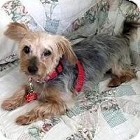 Adopt A Pet :: Lexie - Hardy, VA