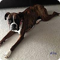 Adopt A Pet :: Allie - St. Robert, MO