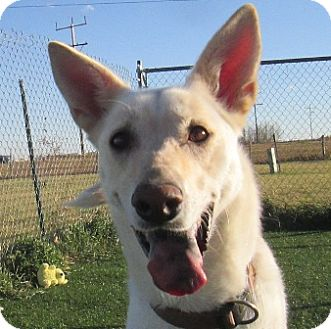 Labrador Retriever Mix Dog for adoption in Lloydminster, Alberta - Sammie