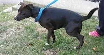 Feist Mix Dog for adoption in Prestonsburg, Kentucky - connor