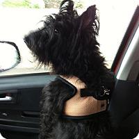 Adopt A Pet :: *Sissy - PENDING - Westport, CT