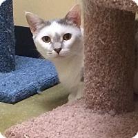 Adopt A Pet :: Sophie - Woodstock, GA