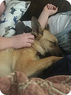 German Shepherd Dog Mix Dog for adoption in Saddle Brook, New Jersey - TIMBA