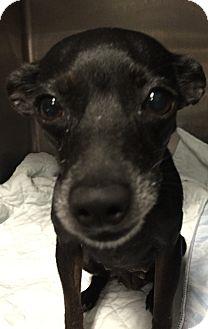 Chihuahua Mix Dog for adoption in Powder Springs, Georgia - Lil Princess