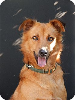 Retriever (Unknown Type) Mix Dog for adoption in Long Beach, New York - Shakira