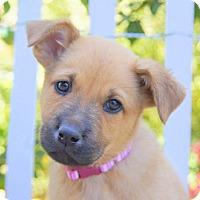 Adopt A Pet :: Adelaide von Portia - Thousand Oaks, CA