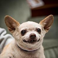 Adopt A Pet :: Buffy Garcia - Fresno, CA