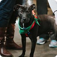 Adopt A Pet :: Mike - Boston, MA